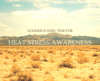 Summer is here. Time for heat stress awareness