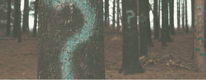 Image of trees with question marks spray painted on them